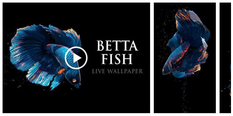 Betta Fish Live Wallpaper Free Go Apk Files